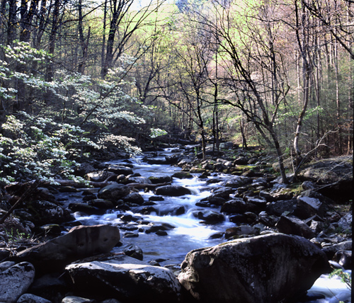 Smokey Mountains National Park